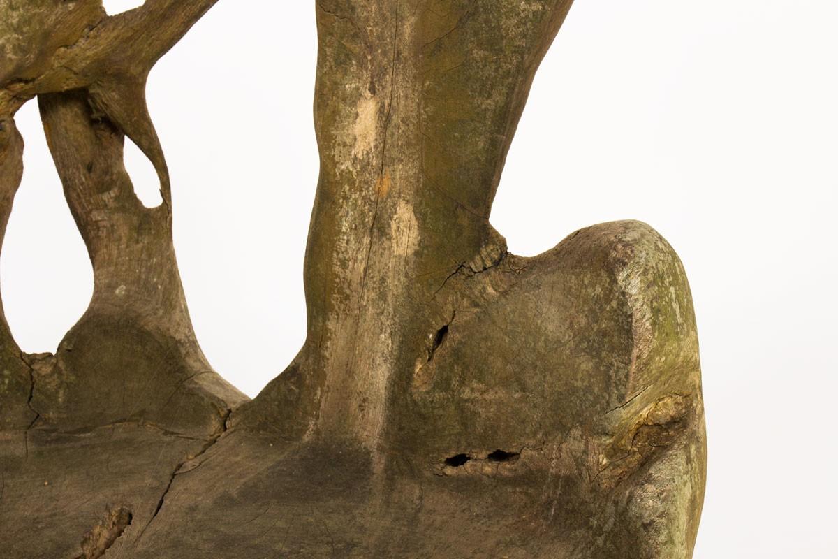 Armchairs in teck root brutalist design 1950
